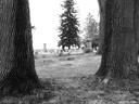 Gourdneck Prairie Cemetery #08