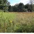 Al Sabo 2 -- The prairie is a mix of grasses and broadleaf plants, mostly yarrow, goldenrod, gentians, and milkweed.