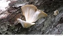 Al Sabo 22 -- A close up of one of the fungi in the previous picture.