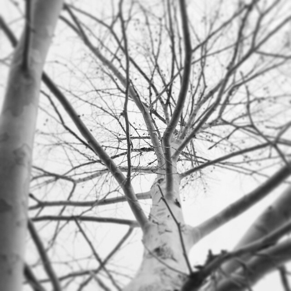 Winter branches