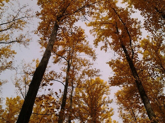 One day last fall, in the woods, with the twins. Look up.