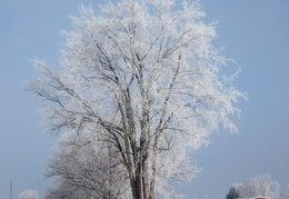 Hoarfrost Morning (December 2010)